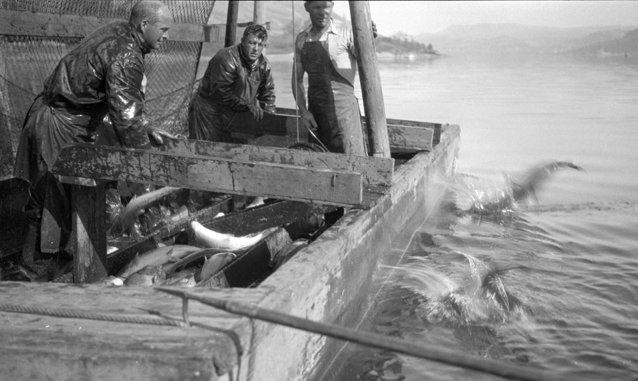 Commercial Salmon Fishing, 1932