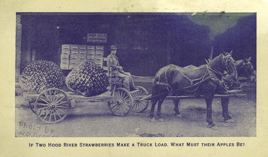 Hood River Strawberries, Circa 1900