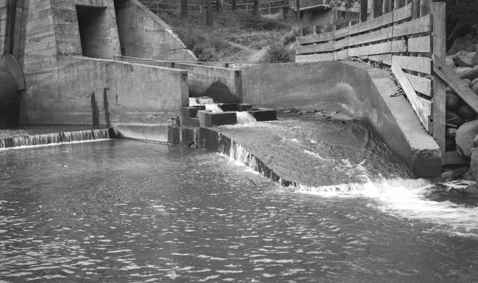 Powerdale Fish Ladder